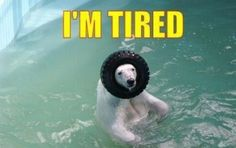 No polar bears were harmed in the making of this image. We think #jokes #funny