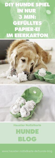 DIY Hunde Spiel in nur 3 Minuten Vorbereitungszeit: gefülltes Papier-Ei im Eierkarton - jetzt bei uns im #haustier #notfallkarte #hunde #blog