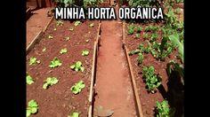Minha horta orgânica