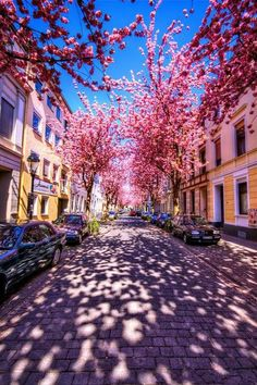 Follow the cherry brick road, Germany