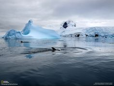 free wallpaper and screensavers for iceberg