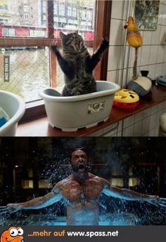 Meine Katze ist Wolverine