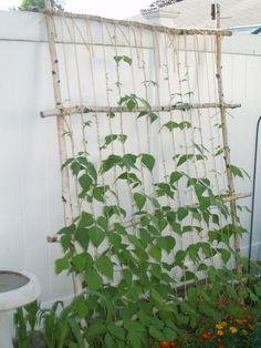 leaning string bean trellis – one veggie at a time - Alles über den Garten Bean Trellis, Diy Trellis, Garden Trellis, Pole Beans Trellis, Garden Planters, Bean Garden, Cucumber Trellis, Plantar, Edible Garden