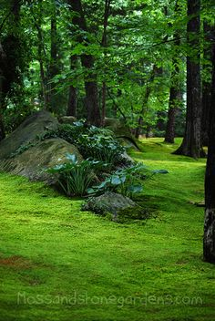 hostas on stone hill in moss lawn....I would like a moss lawn