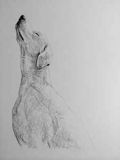 Day #24 - Graphite on card by Lucy Wilson, New Zealand…