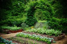 Vegetable garden, watter fence, arched gate | Flickr - Photo Sharing!