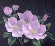 The Alberta Wild Rose