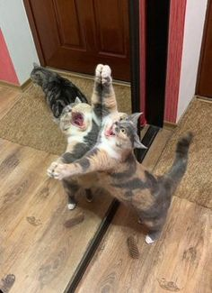 Love Cute Animals shares pics of playful animals, cute baby animals, dogs that stay cute, cute cats and kittens and funny animal images. Cute Little Animals, Cute Funny Animals, Funny Cats, Funny Cat Pics, Cats Humor, Funny Horses, Cat Breeds List, Gato Calico, Calico Cats