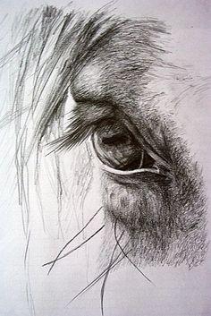 It's in their eyes…some of my favorite photos are the ones I take of a horses eye! Es ist in ihren Augen … einige meiner Lieblingsfotos sind die, die ich von einem Pferdeauge nehme! Pencil Drawings Of Animals, Horse Drawings, Animal Sketches, Drawing Sketches, Art Drawings, Drawing Ideas, Sketching, Horse Pencil Drawing, Pencil Art