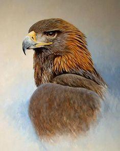 Golden Eagle 24in 18in Oil on Panel by chandlerwildlifeart on DeviantArt