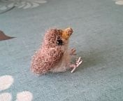 羊毛フェルト すずめ ひな 小鳥がいるよ:So-netブログ