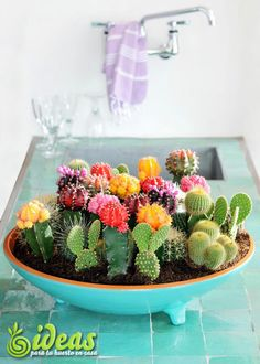 cactus centro de mesa