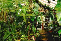 Home Tropical Atrium | ... page explains how nature does it and how you can duplicate it at home