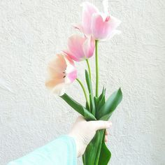 Tulips from the garden