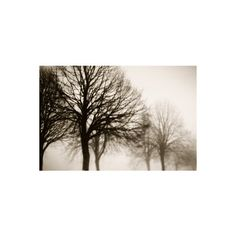 Tree Tree Photography Brown Tree Photo Print Minimalist Tree Photo... (1.620 RUB) ❤ liked on Polyvore featuring home, home decor and wall art