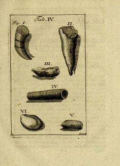 Thesaurus subterraneus ducatus Brunsvigii id est Braunschweig mit seinen unterirrdischen Schätzen und Seltenheiten der Natur. - Biodiversity...