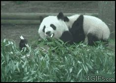 Kungfu Panda - Animals Being Jerks