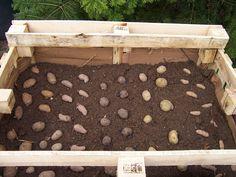 Landleben & Literatur: Kartoffel in der Kiste - Kartoffelturm wieder mal anders