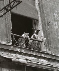 """ClassicPics on Twitter: """"A dog and cat in Paris https://t.co/Nyg0q1kWTh"""""""