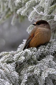 Winter Bird | Purely Inspiration