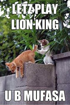 Lion King...that's mean, you creme kitty! And yet, I still found this funny...shame on me. ;)