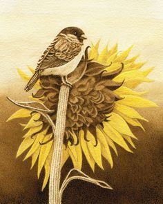 """Chickadee on a Sunflower"" Burned on watercolor paper with color accents."