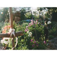 Happy Friday, from the farm.  #currentstate #flowers #seasonal #inseason #grownandgathered #growninthesunshine #organic