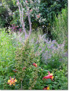 basic companion plants | Permaculture News