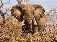 Jackson Hole Art Auction:  Elephant