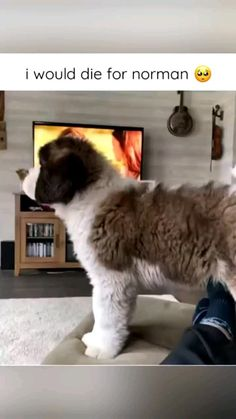 Cute Animal Memes, Funny Animal Videos, Cuddles And Snuggles, Cuddling, Cute Gif, Funny Cute, Cute Baby Animals, Funny Animals, Cool Optical Illusions