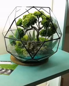 Incredible Bonsai Terrarium You just got home from the nursery with a bunch of beautiful Tillandsias. You handpicked the best air plants that Orchid Terrarium, Terrarium Centerpiece, Cactus Terrarium, Lizard Terrarium, Fairy Terrarium, Turtle Terrarium, Terrarium Table, Hanging Terrarium, Glass Terrarium Ideas