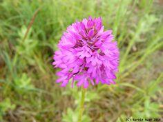 Wild flower Copyright (C) Barbie Swan 2014
