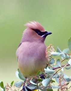 Pink bird -- I don't know if this is real coloration, but it's exquisite either way.