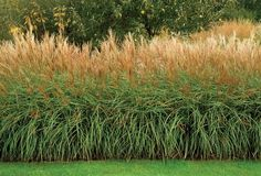 Glorious Hedges | Garden Design