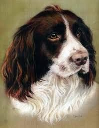 Image result for paintings springer spaniel