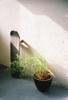 This is awkwardy cool, just some random plant and my favorite, a skateboard