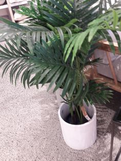 Adair Plant