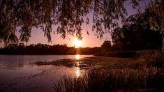 Jezioro, Zachód słońca, Gałęzie, Drzewa, Trawa