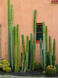 Jardim de cactos e suculentas. México.