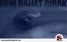 """Leave me alone"" - Freedom, dolphins, anti-captivity     http://yunuslaraozgurluk.com/sites/default/files/beni_rahat_birak.jpg"