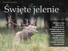 """W nawiązaniu do naszego tematu miesiąca, we wrześniowym wydaniu """"Łowca Polskiego"""" prezentujemy niezwykłą historię białych jeleni, które bywały ucieleśnieniem nadprzyrodzonych mocy oraz symbolem politycznej potęgi i bogactwa, i które do dziś obecne są w mitach, wierzeniach i przesądach łowieckich.  Zapraszamy do lektury!"""