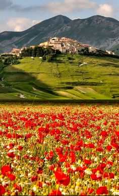 A cheery Castelluccio, Umbria, in the Apennine Mountains of central Italy. The village dates from the 13th century or slightly earlier, and is known for red poppies and yellow rapeseed during Spring