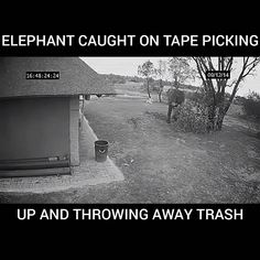 Elephant Caught on Tape Picking Up and Throwing Away Trash amazing animals Elephant Caught on Tape Picking Up and Throwing Away Trash Cute Funny Animals, Funny Animal Pictures, Cute Baby Animals, Animals And Pets, Smart Animals, Animals Planet, Funny Animal Videos, Amazing Animals, Animals Beautiful