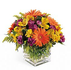 Send greetings with our gaily colored bouquet. Bright orange Gerbera daisies and purple mini carnations are only slightly subdued by golden alstroemeria and solidago.