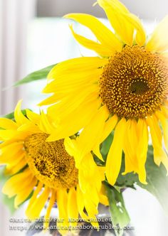Far Above Rubies: Sunflowers
