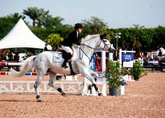 A grey warmblood horse approaches a jumping fence at the 2012 FTI Winter Equestrian Festival in Wellington, Fla.
