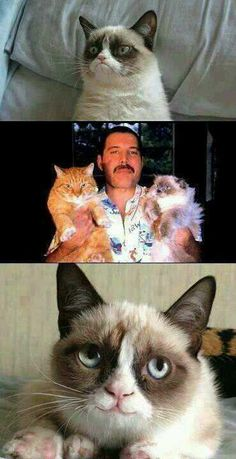 Freddie mercury loved cats Meme | Slapcaption.com