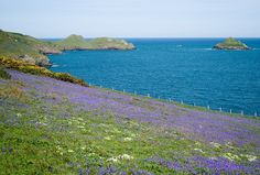 Bluebells, North Cornwall, Easter Sunday 2011 by Mukumbura, via Flickr