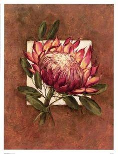 Art Print: Tropical Squares ll by Barbara Mock : Protea Art, Protea Flower, Art Floral, Botanical Art, Botanical Illustration, Watercolor Flowers, Watercolor Paintings, Bird Paintings, Realistic Rose