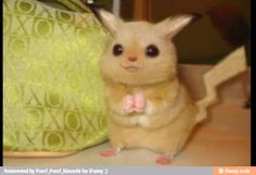 If Pikachu were real ^-^